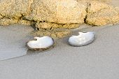 pic of oyster shell  - Sea shell with pearl on the sandy beach - JPG