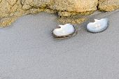 foto of oyster shell  - Sea shell with pearl on the sandy beach - JPG