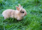 A bunny sitting on green grass