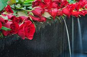 Red Rose With Fountain