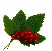 Red Currant On A Green Leaf Isolated