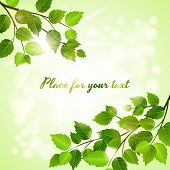 Fresh green background with spring leaves