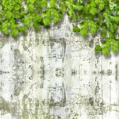 Bright Green Foliage On Background Summer Ruined Stone Wall
