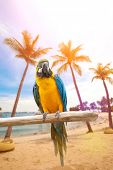 stock photo of sun perch  - Beautiful macaws perched on a wooden post enjoying the warmth of the evening sun by the beach - JPG
