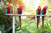 pic of sun perch  - Beautiful macaws perched on a wooden post enjoying the warmth of the evening sun - JPG