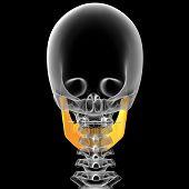 3D Render Medical Illustration Of The Jaw Bone