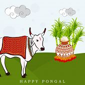 South Indian harvesting festival, Happy Pongal celebrations with cow, rice in traditional mud pot and sugarcane on nature view background.