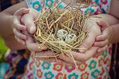 People Of Two Generations Holding Nest In Palms