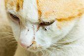 image of yellow tabby  - Closeup of yellow tabby cat face - JPG