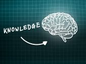 Knowledge Brain Background Knowledge Science Blackboard Turquoise