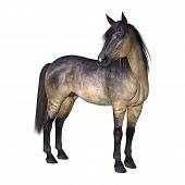3D digital render Horse