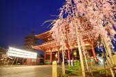 Asakusa, Tokyo, Japan at Senso-ji Temple in the spring season.