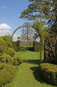 Country garden scene with topiary