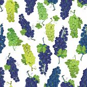 Violet and green grapes vector seamless pattern
