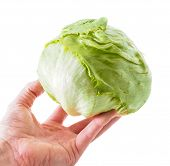 Hand Holding A Whole Fresh Green Lettuce Isolated Towards White