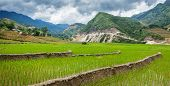 Rice field terraces (rice paddy). Near Cat Cat village, near Sapa, Vietnam