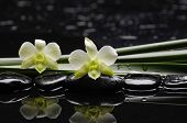 Still life with beautiful white orchid with green plant stem