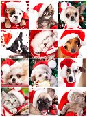 kitten and puppy with santa hats close-up portrait, set