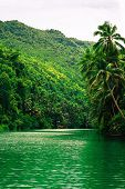 Large Tropical River With Green Water