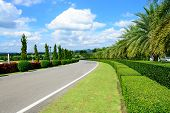 Road In The Park With Blue Sky