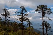 Landscape, Bhutan.