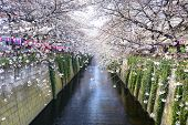 Tokyo, Japan at the Meguro Canal during the spring cherry blossom festival.