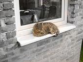 Cat Relaxing By Window
