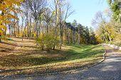 Beautiful autumn trees in park