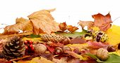 Group Many Forest Fruits On Autumn Leaves In Line