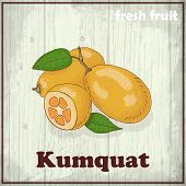image of kumquat  - Fresh fruit sketch background - JPG