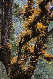picture of epiphyte  - Epiphytes in autumnal colors - JPG