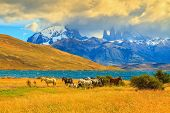 pic of herd  -  Rocks Torres del Paine visible among the clouds - JPG