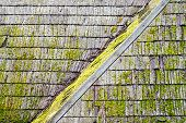image of algae  - Wooden shingle roof with molds and algaes on the surface - JPG
