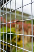 picture of lock  - Vertical image of a closed padlock locked onto a square fence with shallow depth of field - JPG