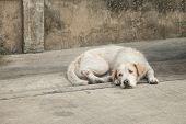 picture of homeless  - Homeless dog sleep on dirty street background soft blur - JPG