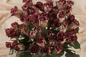 red tipped roses