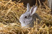 foto of rabbit hutch  - Little rabbit on Dry Grass  - JPG