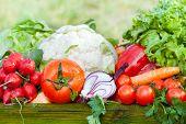 stock photo of farmers market vegetables  - fresh organic ripe vegetable outdoor farmer market - JPG