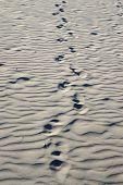 foto of footprints sand  - Track of human footprints in the sand - JPG