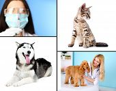 picture of furry animal  - Vaccination and treatment of animals - JPG