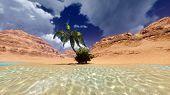 image of oasis  - Oasis - JPG