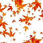 stock photo of fall leaves  - Autumn leaves background - JPG