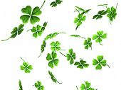 3D illustration of falling shamrock leaves Saint Patrick's day symbol isolated on white background