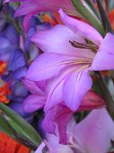detail of a display of wonderful bright colored flowers, great colormix!