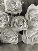 platinum camera reproduction/reflected roses
