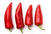 foto of chili peppers  - Red chili peppers isolated on white - JPG