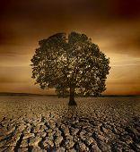 Einzigen Baum sterben in einem gebrochenen Land wegen Umweltverschmutzung und Erderwärmung