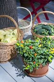 Different Vegetables In Baskets