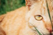 Extreme close up cat portrait. Cat eye. poster
