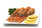 dish of shrimps on white background
